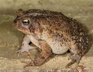 toad 1