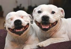 smiling puppies