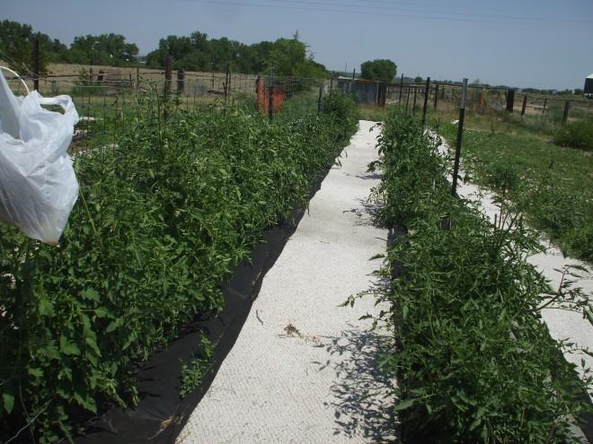 good pic our veggie garden