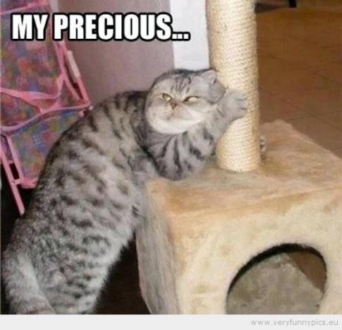 my precious-cat pic