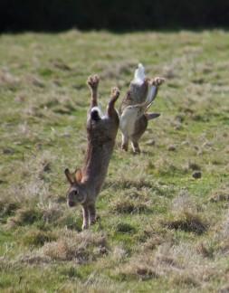 bouncin bunnies