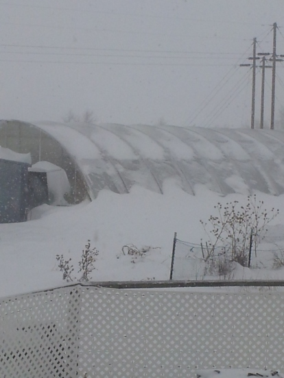 greenhouse during 2-2-16 storm