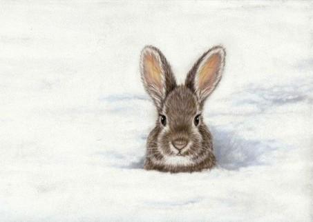 peek bunny