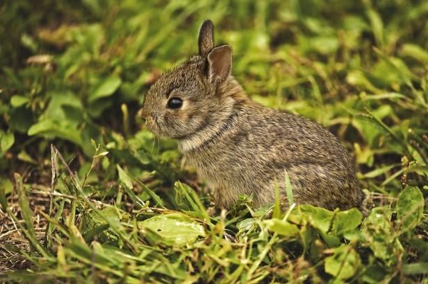 bb bunny