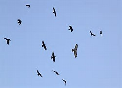 vultures are back 3 31 16