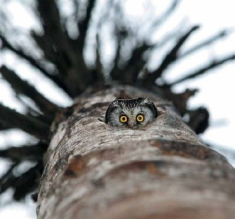 owl peek