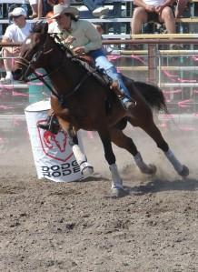 barrell race horse