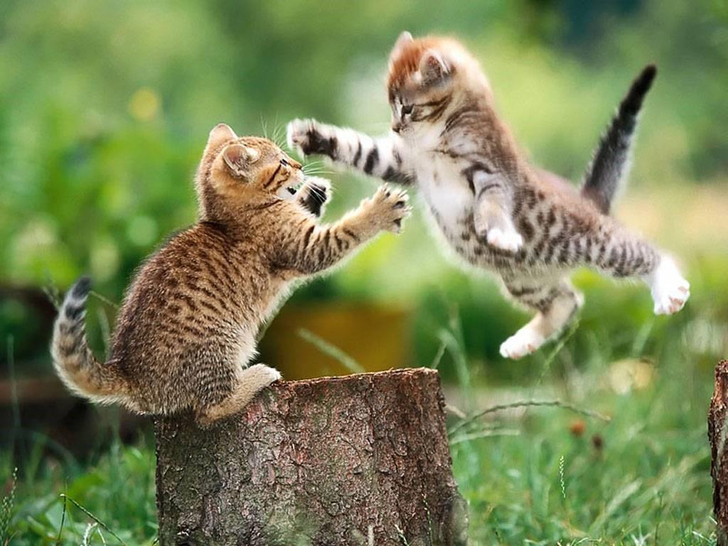 dancing kittens-saved