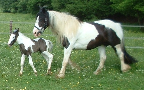 dolley and baby