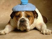 headache dog