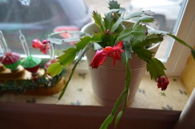 xmas-cactus-2