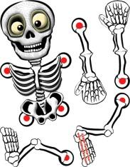 skeleton-parts