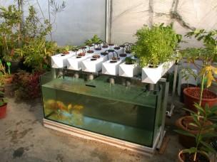 hydroponics-system