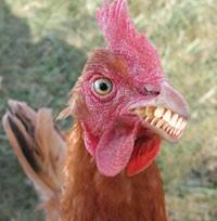 scary mutant chicken