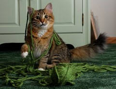 cat n yarn