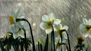 flowers in spring rain