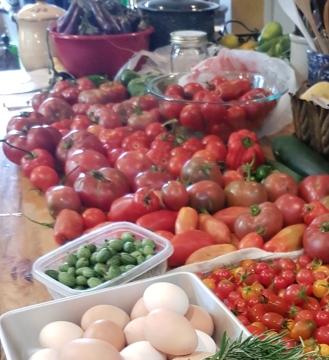 tomato variety 2017