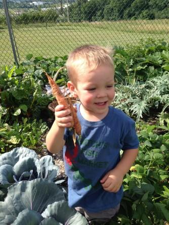 kids pickin carrots