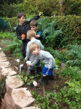 kids pickin veggies
