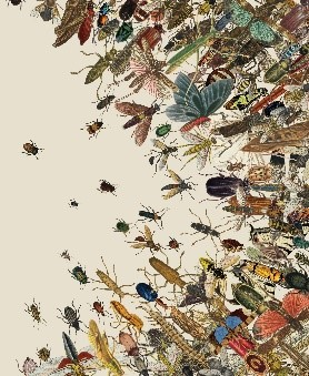 multiple insects