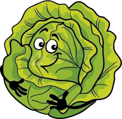 happy cabbage