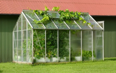 mini greenhouse 1