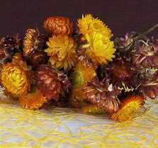 dried straw flowers