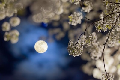garden by moon 1