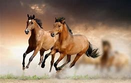pony express pic of horses