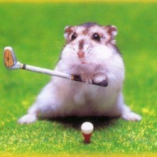 silly hampster golfer