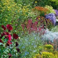 flower yard