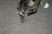 cat w mouse