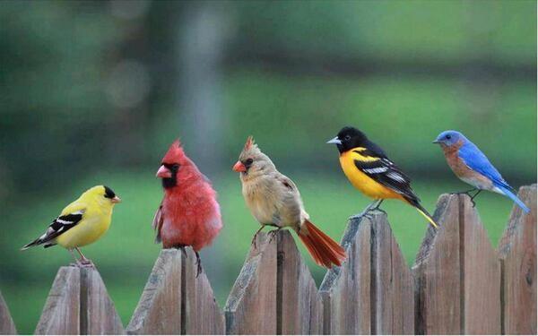 wild birds 1