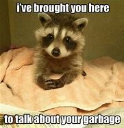 talk about garbage-raccoon